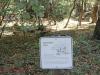 Redwoods-0921-06
