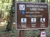 Redwoods-0921-07
