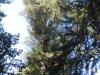 Redwoods-0921-08