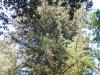 Redwoods-0921-09