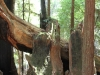 Redwoods-0921-13