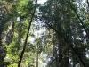 Redwoods-0921-15