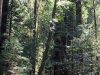 Redwoods-0921-18