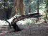 Redwoods-0921-19