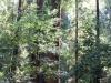 Redwoods-0921-20