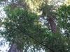 Redwoods-0921-24