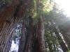 Redwoods-0921-26