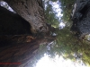 Redwoods-0921-28