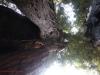 Redwoods-0921-29