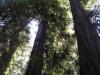 Redwoods-0921-39