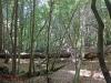 Redwoods-0921-40