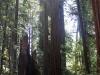 Redwoods-0921-44