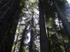 Redwoods-0921-45