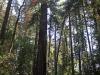 Redwoods-0921-46