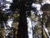 Redwoods-0921-47