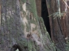 Redwoods-0921-48