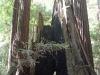 Redwoods-0921-51