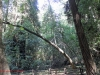 Redwoods-0921-52