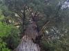 Redwoods-0921-57