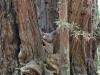 Redwoods-0921-61
