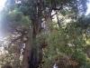 Redwoods-0921-65