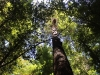 Redwoods-0921-66